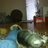 Dexter sleeping