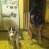 Dexter and Kenya refrig pic2