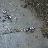 Glass at Jacobsen 12-3-12