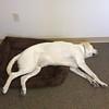 Donna Vis dog - Cooper2