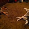 Kenya and Dexter sleeping