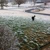 Snow in Illinois 1