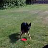 Kenya frisbee3