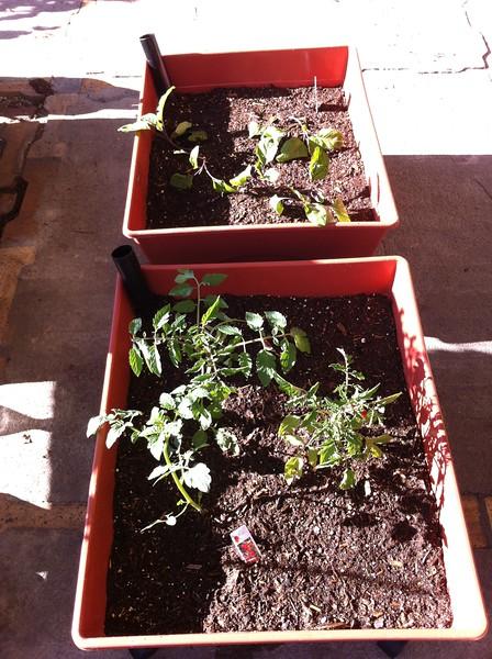 Grandma vegetable boxes2