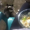 Susan in chair with Dexter eating lunch