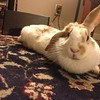 Lisa's rabbit