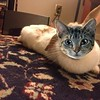 Lisa's rabbit as a cat