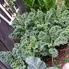 Susan garden