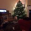 Lisa SF Christmas tree