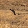 Kenya in field