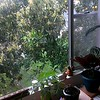Cindy apartment window 2-22-15