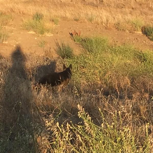 Kenya on the prowl