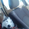 Dexter sleeping in car
