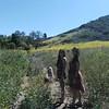 Susan-Cindy-Dexter hiking