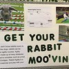 Get Your Rabbit Mooving
