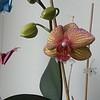 Grandpa's orchid