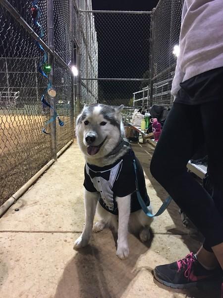 Susan softball team - Dexter in dugout