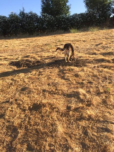 Kenya chasing squirrels 7-22-2017