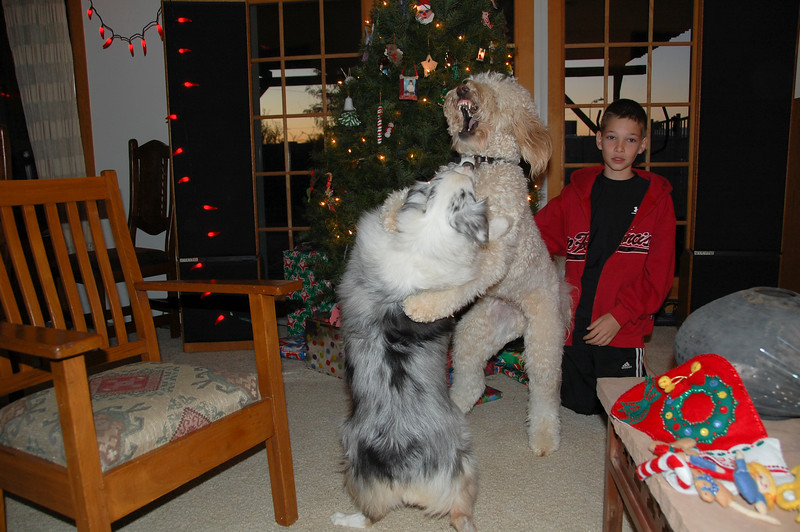 Lily and Duffy. So ferocious about presents until ... (next)