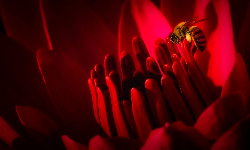 Lily and Honey Bee - 13.jpg
