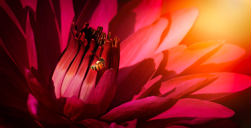 Lily and Honey Bee - 10.jpg