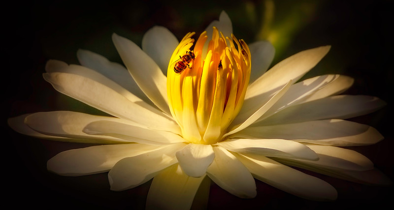 Lily and Honey Bee - 11.jpg