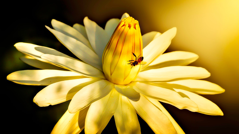 Lily and Honey Bee - 14.jpg