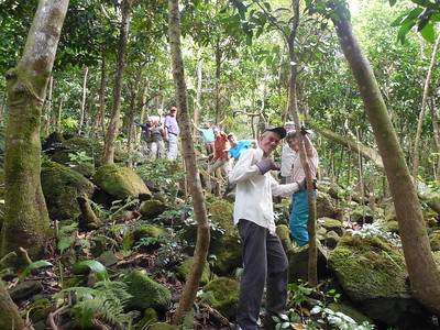 Wilderness Volunteers: 2016 Limahuli National Tropical Botanical Garden service trip