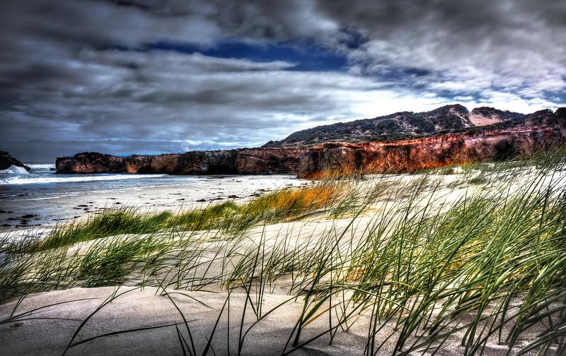 Dramatic Sandy Grass