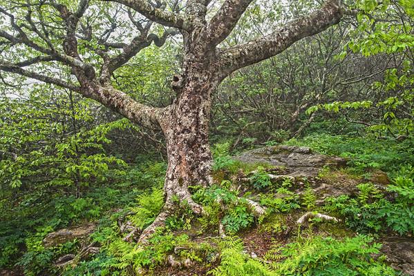 Craggy's Tree Of Life