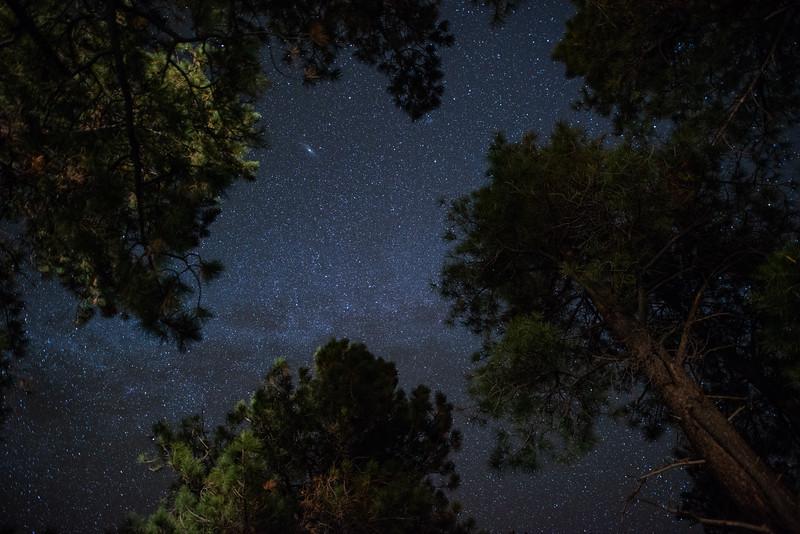 Starlit Treescape