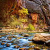 """Fall in the Narrows"" - Zion National Park, Utah"