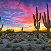 """""""Sunset Serenade"""" - Scottsdale, Arizona"""