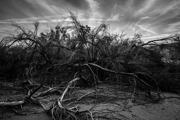 Dead Branches I