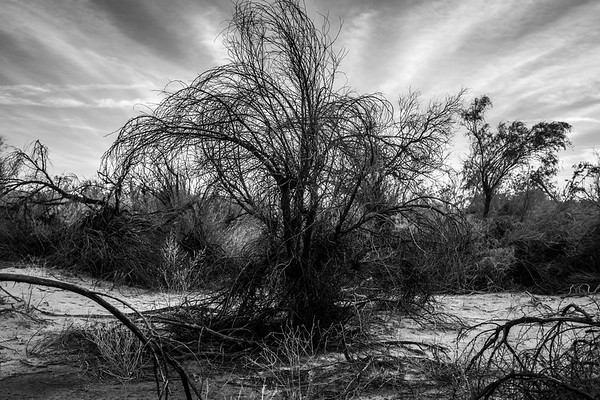 Dead Branches II