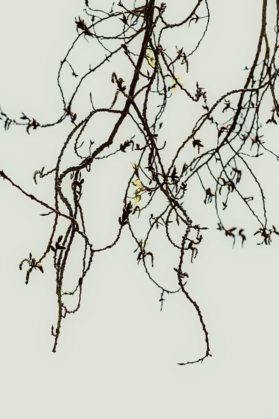 A Tangle of Thin Branches
