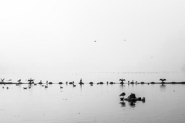 Morning Fog on Lake