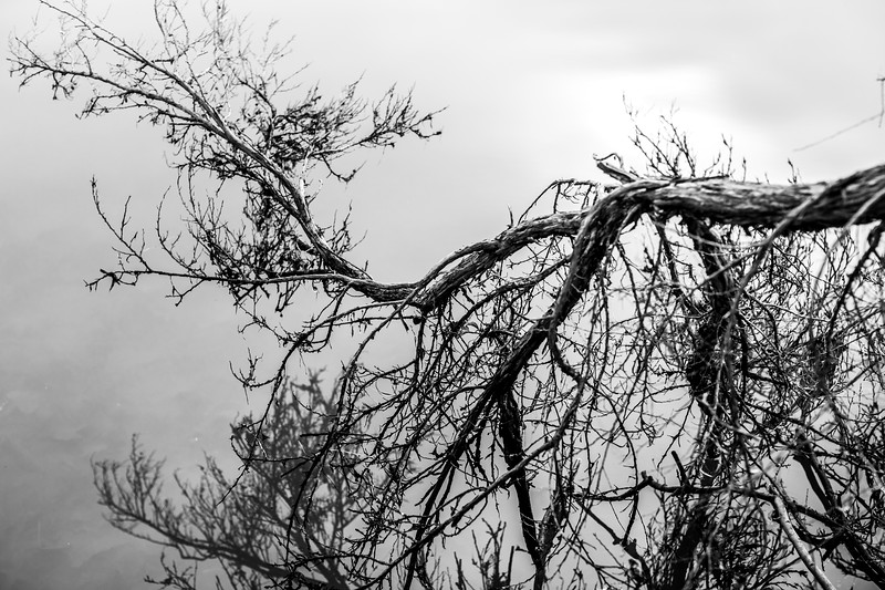 Branch & Reflection on Lake