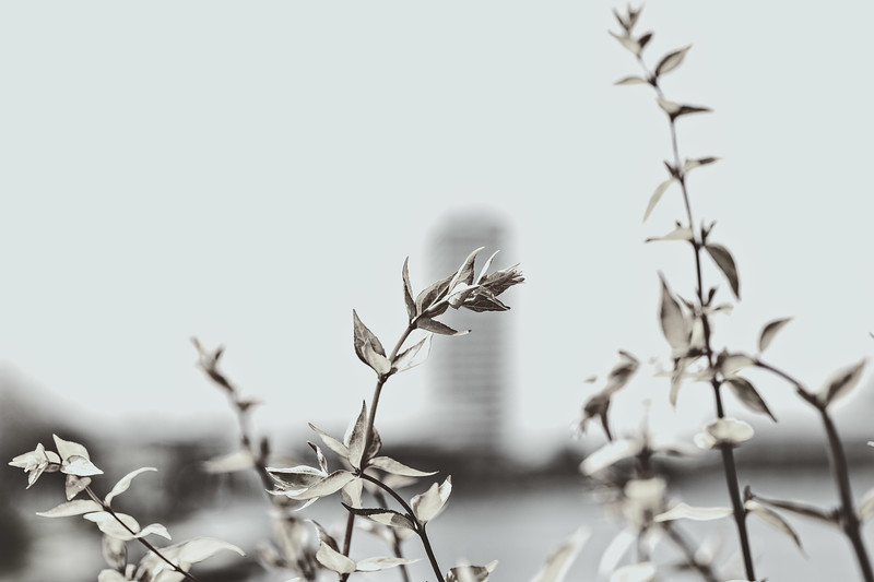 Leaves with Cityscape