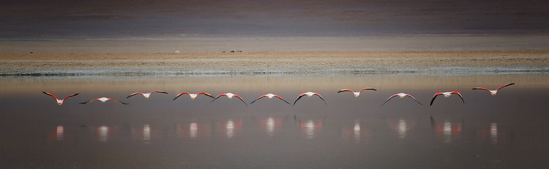 Aligned Flamingos