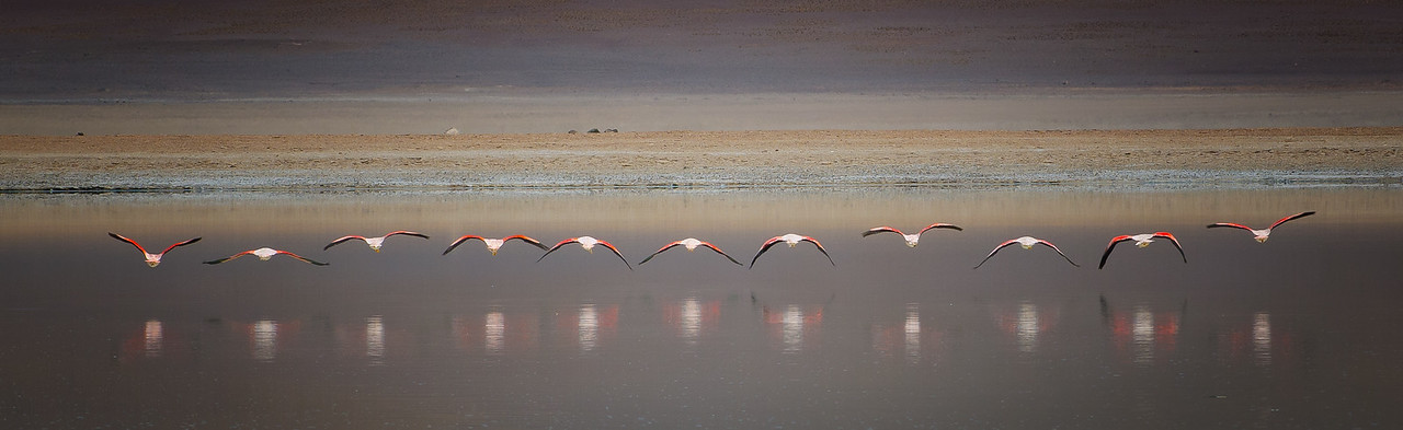 Aligned Flamingos