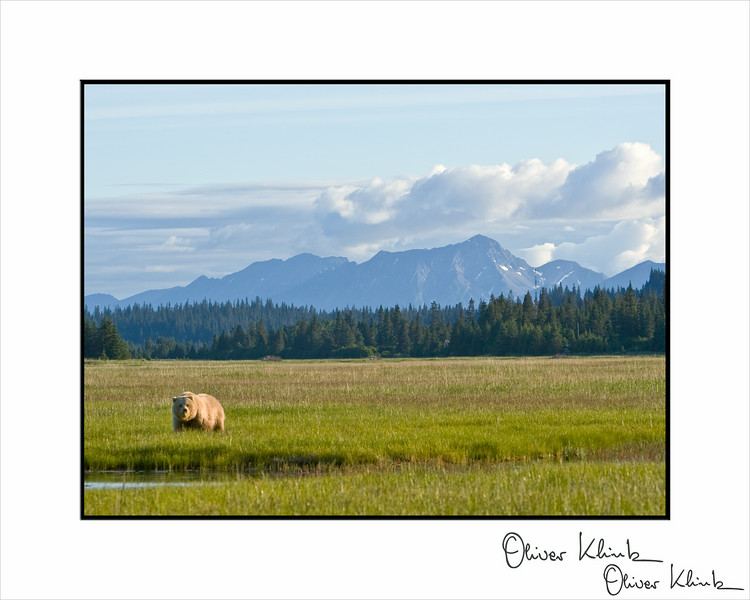 Grizzly Scenic