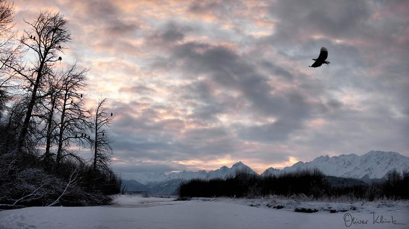 AK_2014; Alaska Wild