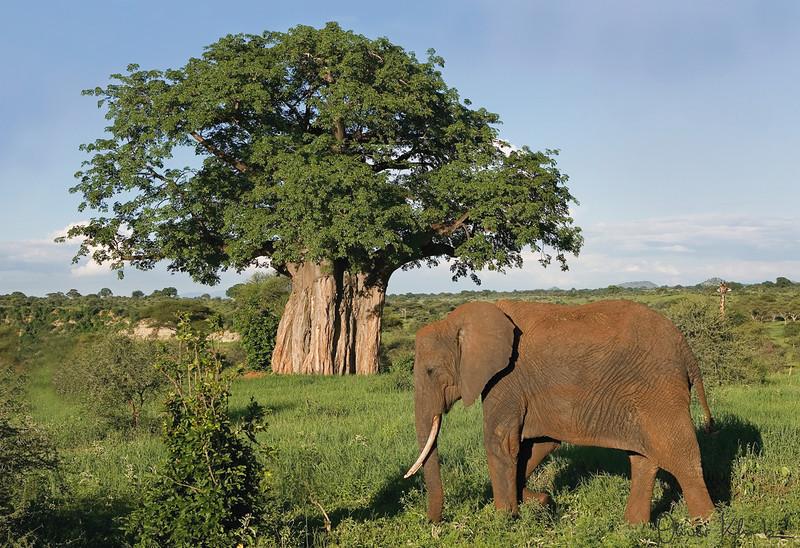 AF_1013; Majestic Africa