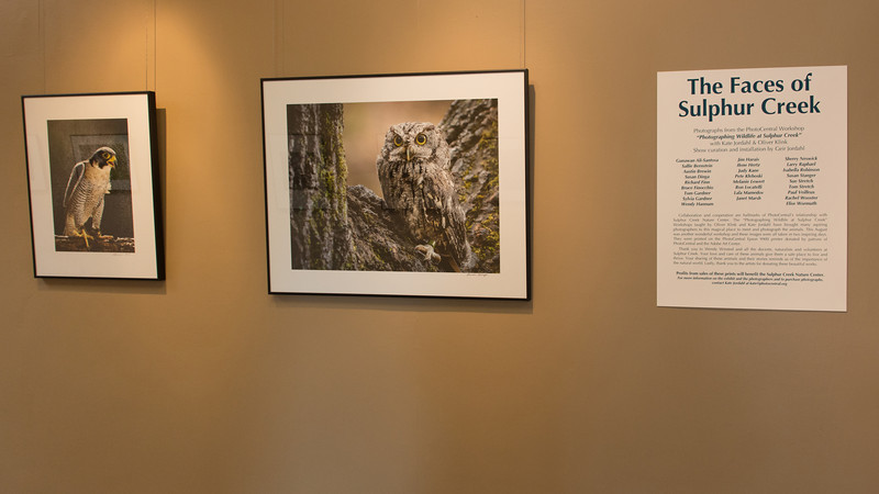 Exhibit at PhotoCentral (August 18 - October 17, 2013) - Images taken during the Wildlife at Sulphur Creek workshop. For more information, please email (oliver@incredibletravlphotos.com).