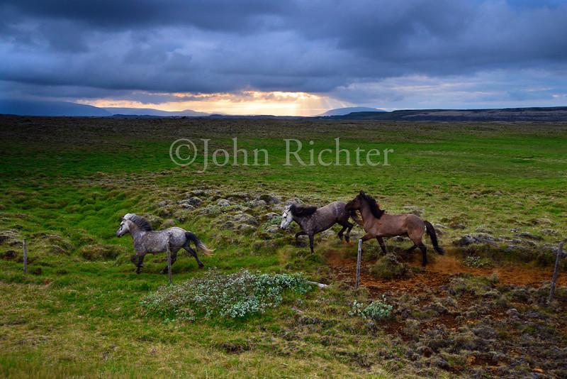 Highlands Equine