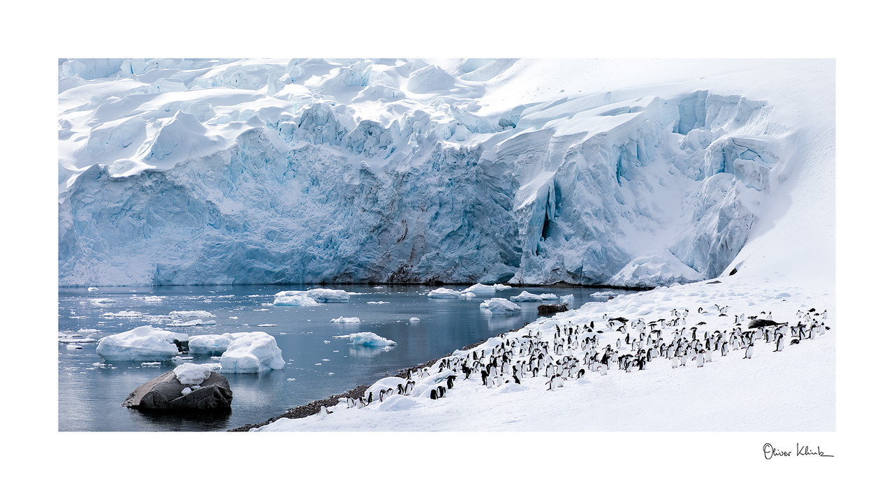 "Title: 	Landing Site<br /> Location:	Antarctica<br /> Size (Framed):	35""x62""<br /> Price:	$1,800<br /> Description:	10,000 and counting. We are back home after a long winter. Well fed, I am ready to find my sole mate."