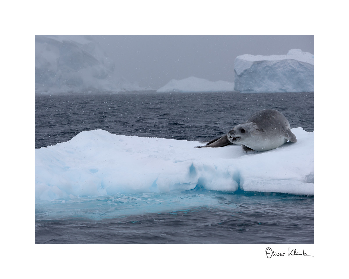 "Title: 	Lonely<br /> Location:	Antarctica<br /> Size (Framed):	9""x11""<br /> Price:	$90<br /> Description:	I am a young seal. My parents are fishing. I need to be quiet to avoid predators."