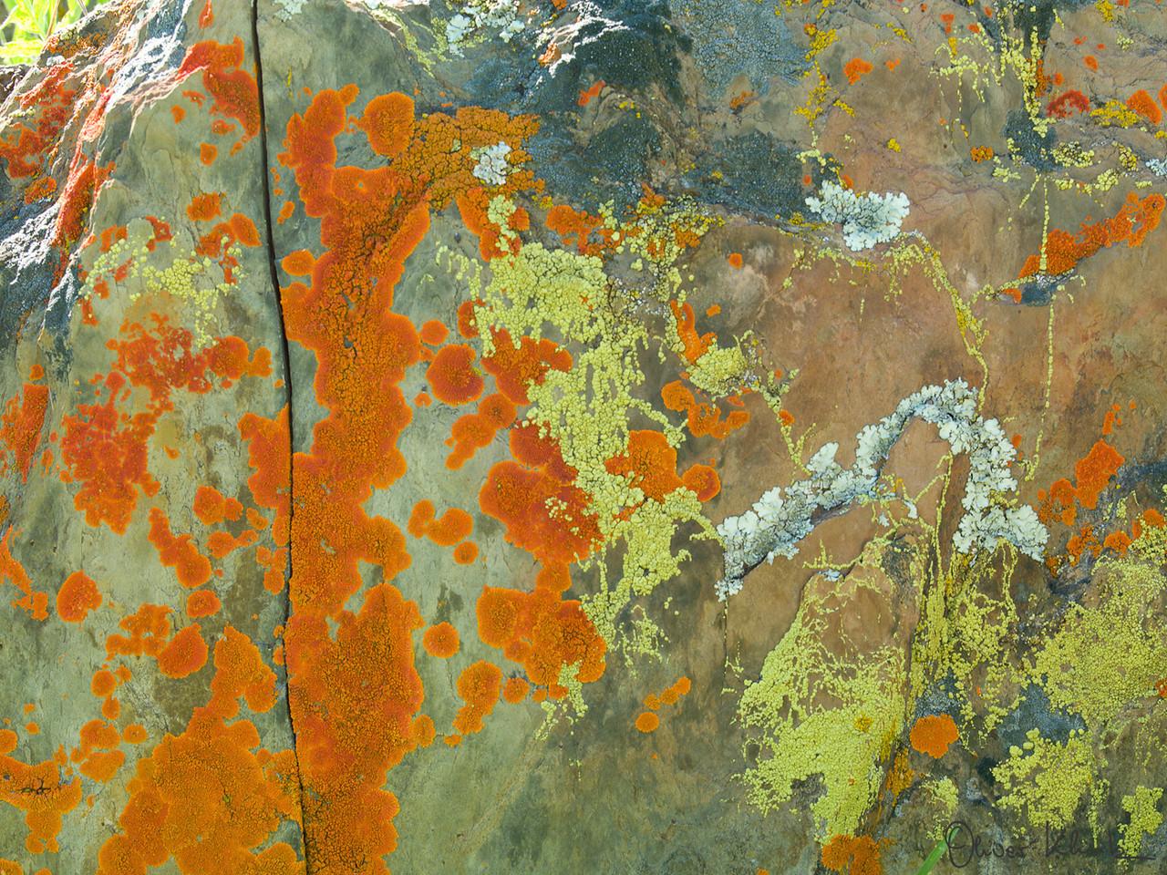 LICH_0001 Title: The Wonderful Lichens (2011)
