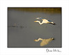 Migrating Birds (Merced National Wildlife Refuge) : Merced Refuge, located in California's northern San Joaquin Valley, is critically important to wintering waterfowl, and attracts large concentrations of ducks, geese, and lesser sandhill cranes. 